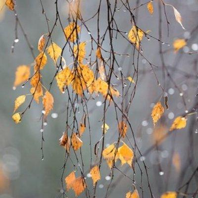 Прогноз погоди на 19 листопада: сильний вітер, дощі та мокрий сніг