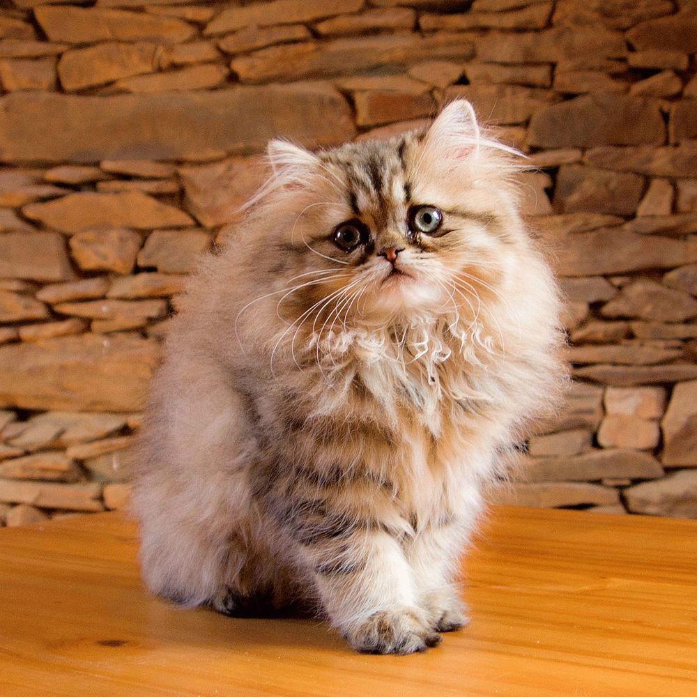 У Києві розшукують волонтерів-гладильників котів