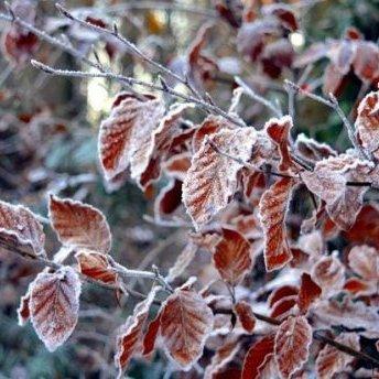 Сніг та дощі: прогноз погоди на 26 листопада