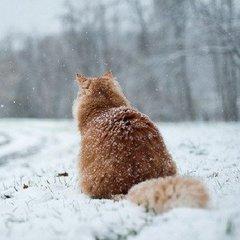 Синоптик розповіла, які рекорди поб'є нинішня зима