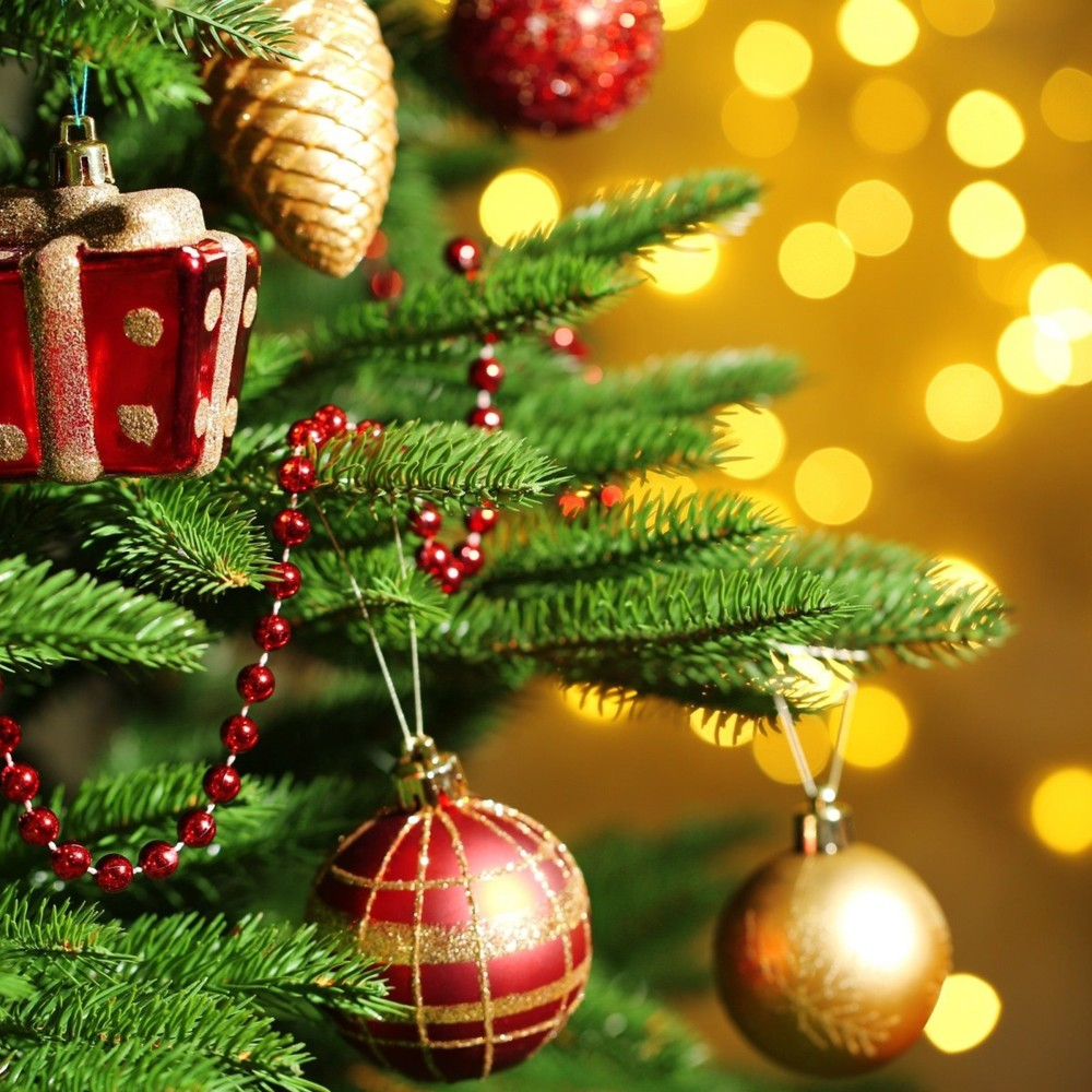 В Україні розпочинається продаж новорічних ялинок: названо ціни