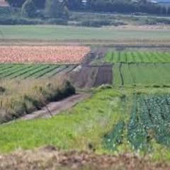 У Запорізькій області АТОшникам видали земельні ділянки на кладовищі (відео)
