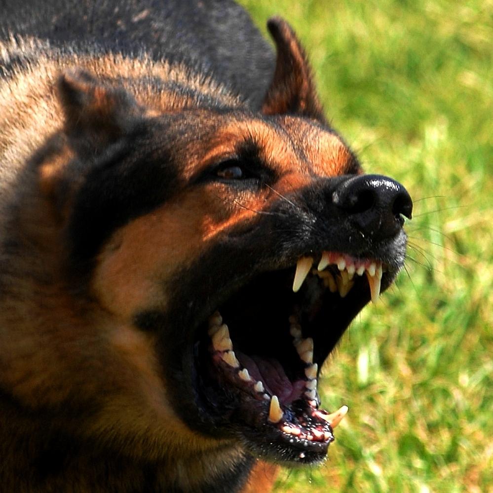 На Дніпропетровщині собаки серед вулиці на смерть загризли жінку (відео)