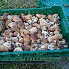У Францію з Росії завезли гриби, заражені радіацією