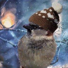 Якою буде погода в Україні у грудні