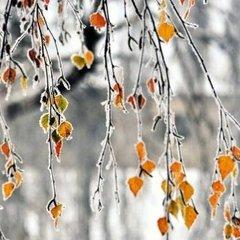 На більшості територій випаде дощ з мокрим снігом: прогноз погоди в Україні на 2 грудня