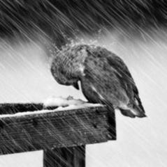 Дощ і сніг: прогноз погоди в Україні на перший робочий день