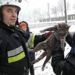 У Кам'янці-Подільському кіт видерся на дерево так високо, що довелось викликати рятувальників (фото)