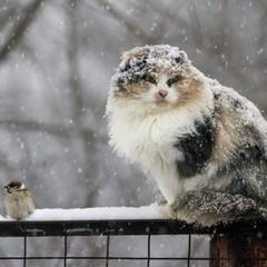 У неділю в Києві очікується сніговий покрив висотою 3-5 см
