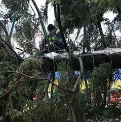Мережу жахнула головна ялинка України (фото)