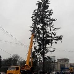Мерії Кишинева повернуть гроші за облізлу ялинку, яку везли з України
