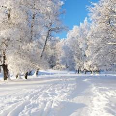 В Україні сьогодні продовжаться снігопади, у багатьох областях похолодає (карта)
