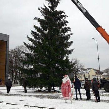 Головною ялинкою в Калінінградській області РФ стало дерево, спиляне на території дитсадка