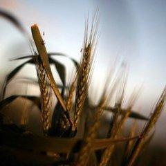 Засідання агарного комітету, де мали заслухати звіт глави Академії аграрних наук, зірвали