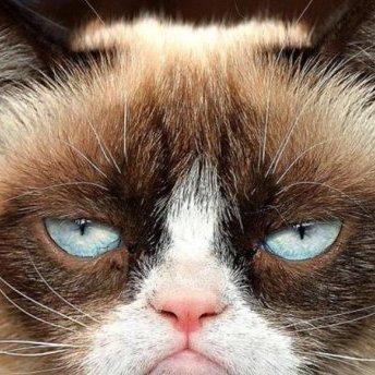 В Києві затримали рейс в Анкару через чоловіка на ім'я Париж із сімома котами на борту