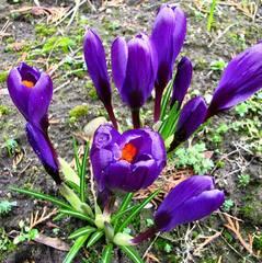 У Львові в ботанічному саду розцвіли квіти (відео)