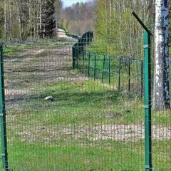 Польща побудує паркан на кордоні із Україною та Білоруссю проти диких кабанів