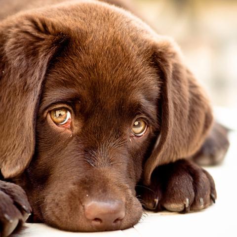 У київському притулку невідомі розстрілюють та калічать собак