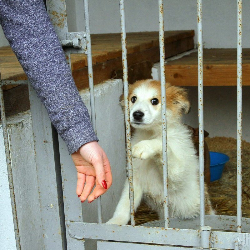 У Львові відкрили перший в Україні Центр всиновлення безпритульних тварин