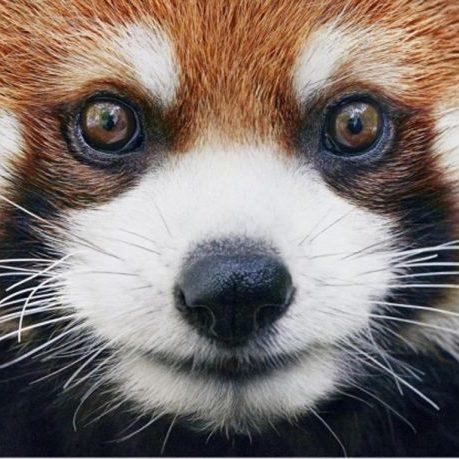 Фотограф 2 роки знімав тварин, які знаходяться на межі вимирання (фото)
