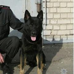На Дніпропетровщині службовий собака допоміг вийти на слід вбивці