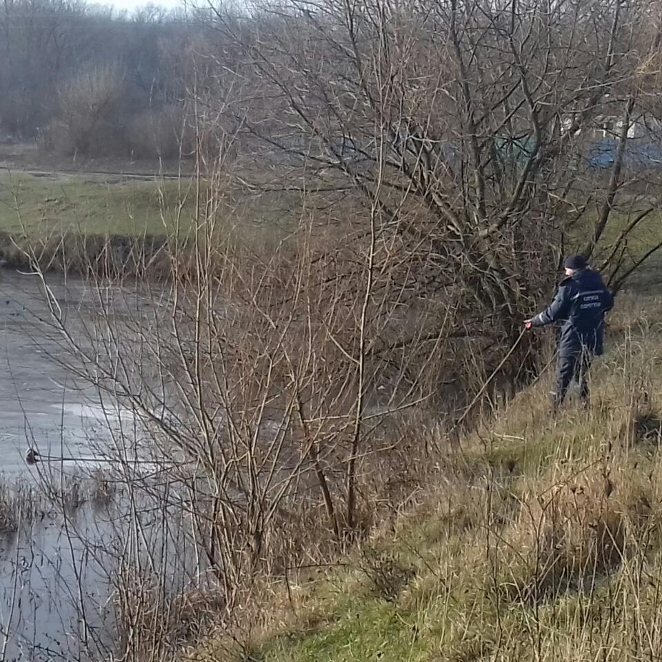 На Кіровоградщині рятувальники допомогли лебедям, які примерзли до криги у ставку