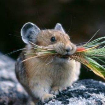 Та тут ціла мафія, – як миші погризли купюр на чималу суму в одному казахстанському банку