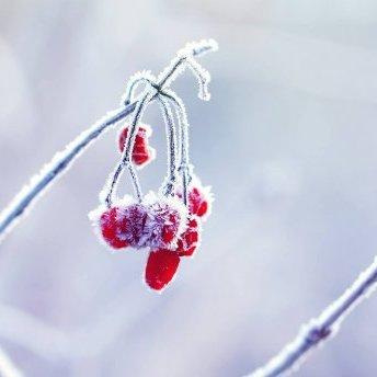 Прогноз погоди на 14 січня: в Україні буде морозно та хмарно з проясненнями