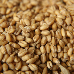 Україна вичерпала квоти на поставки пшениці та кукурудзи в ЄС за 5 днів
