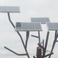 На Черкащині в селі з'явилося дерево від якого можна заряджати гаджети (фото)
