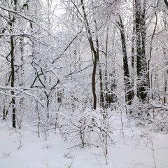 В Україні сьогодні пройде сніг, місцями температура до -9° (карта)