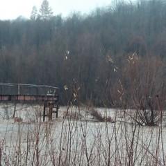 Убиту жінку знайшли на березі річки на Закарпатті