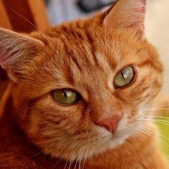 В Італії кіт отримав у спадок 30 тисяч євро