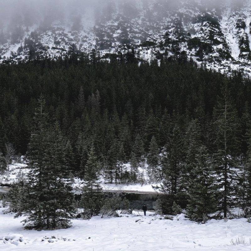 Рятувальники попереджають про лавинну небезпеку у Карпатах