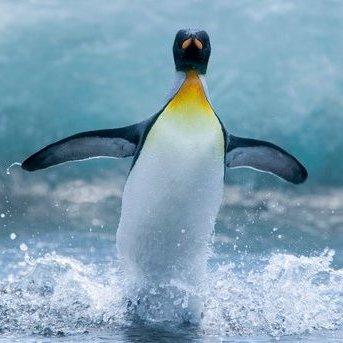 Пінгвін, який застрибнув у човен дослідників, став зіркою інтернету (відео)