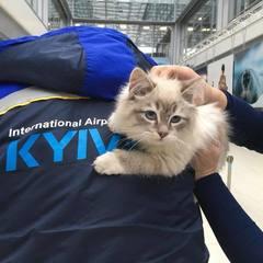 Пасажирка рейсу Київ-Мінськ кинула кошеня в аеропорту (фото)