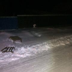На Одещині дівчата на санях зіткнулися із зустрічним автомобілем (фото)