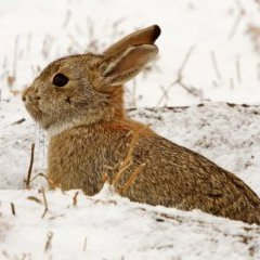 У Казахстані -56 °: тварини від сильного холоду замерзають на ходу (відео)