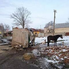 ДТП на Львівщині: постраждав цирковий кінь (фото)