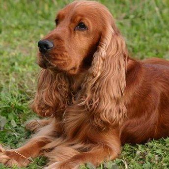 У Львові викрали та жорстоко вбили собаку (фото 18+)