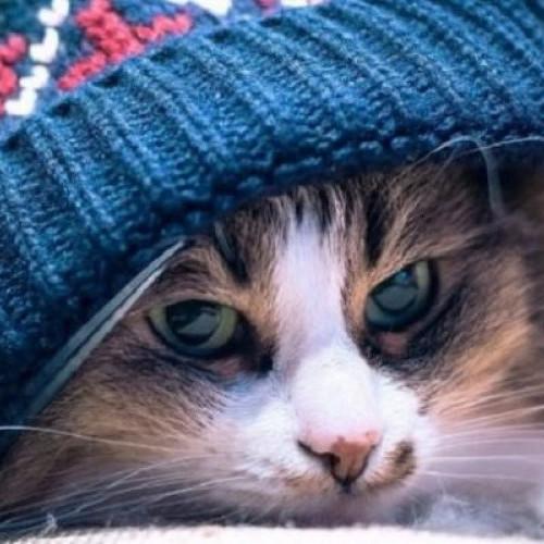 Погода: в Україні потеплішає і буде йти дощ із мокрим снігом