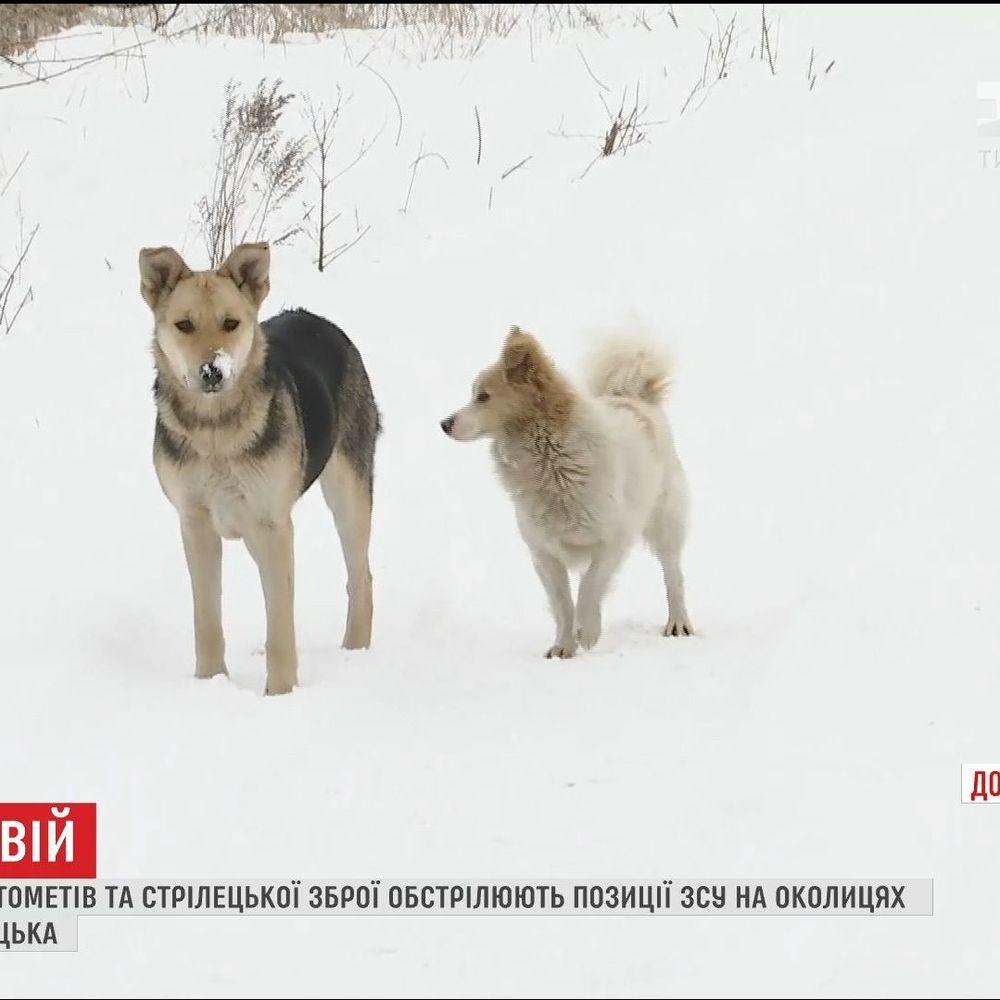 Бойовики використовують собак і котів для відволікання уваги українських бійців