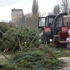 У «Київзеленбуді» повідомили, скільки ялинок кияни здали на утилізацію