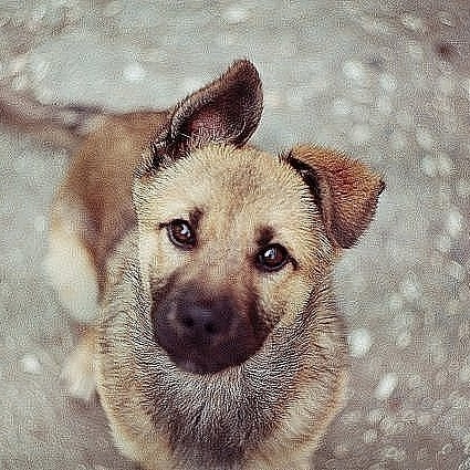 У Сарнах патрульні врятували собаку, якого збив автомобіль (відео)