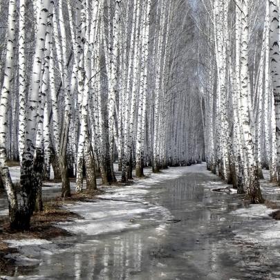 Погода: на півночі та сході країни очікується сніг, температура до +7 у Криму