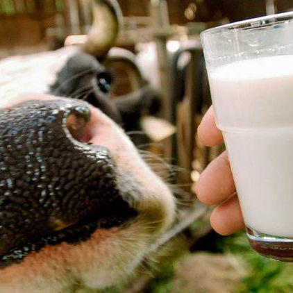 В Україні не заборонять продаж другосортного молока, - представництво ЄС в Україні