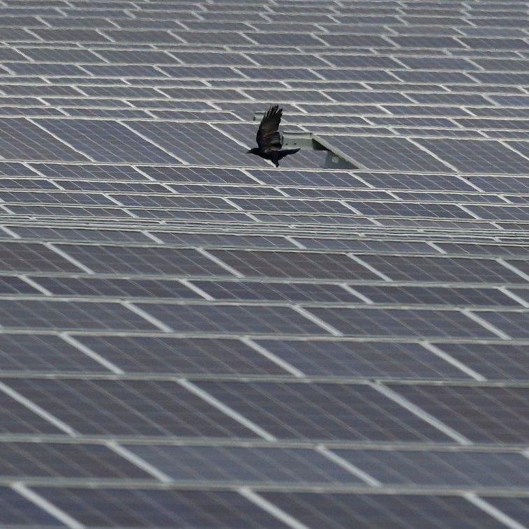 Перша сонячна електростанція в зоні ЧАЕС 8 лютого отримає ліцензію