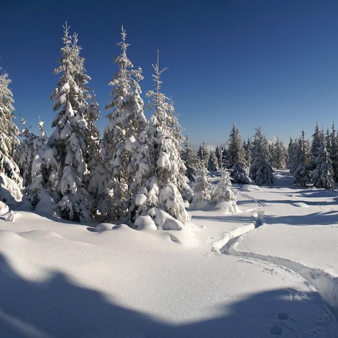 Погода: в Україні сніжитиме, температура повітря від -7 до +6 градусів