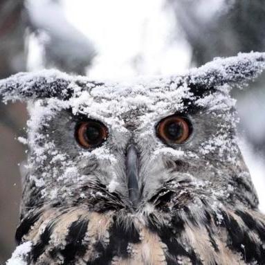 Найближчі три дні Україну чекають дощі з мокрим снігом