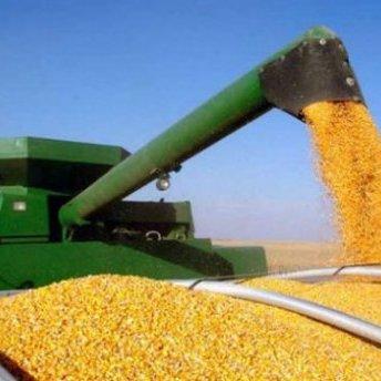 Українська кукурудза витіснила американську на китайському ринку
